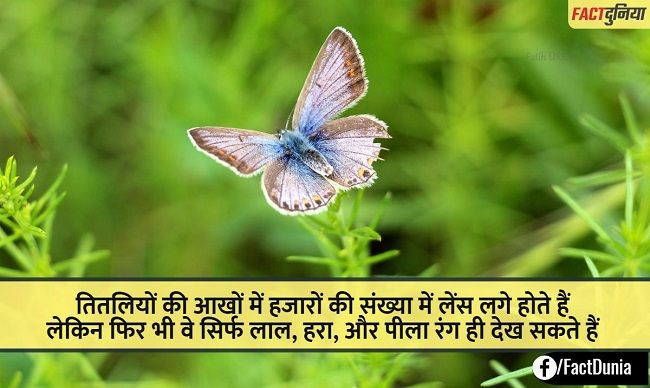 butterfly-nature-fact-hindi