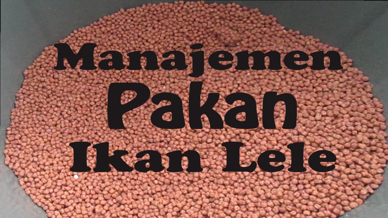 Biksen Akuaponik Manajemen Pakan Ikan Lele