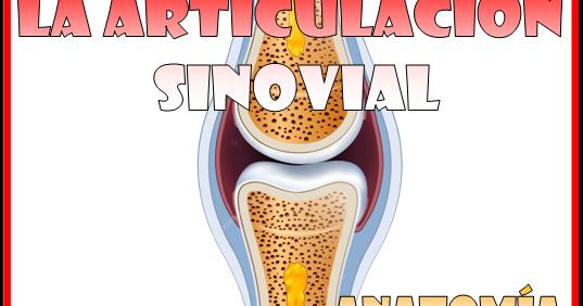 La articulación sinovial [Anatomía y fisiología] ~ Optifutura