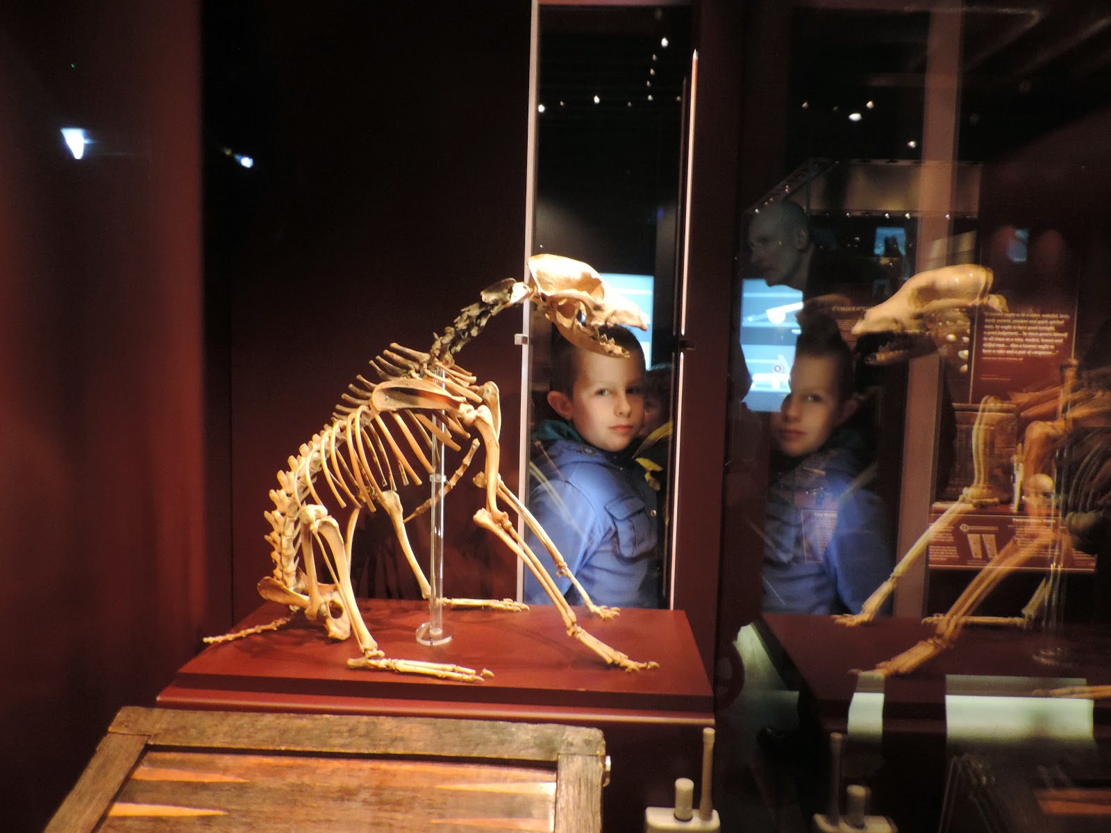 skeleton of 16th century dog aboard mary rose portsmouth historic dockyard