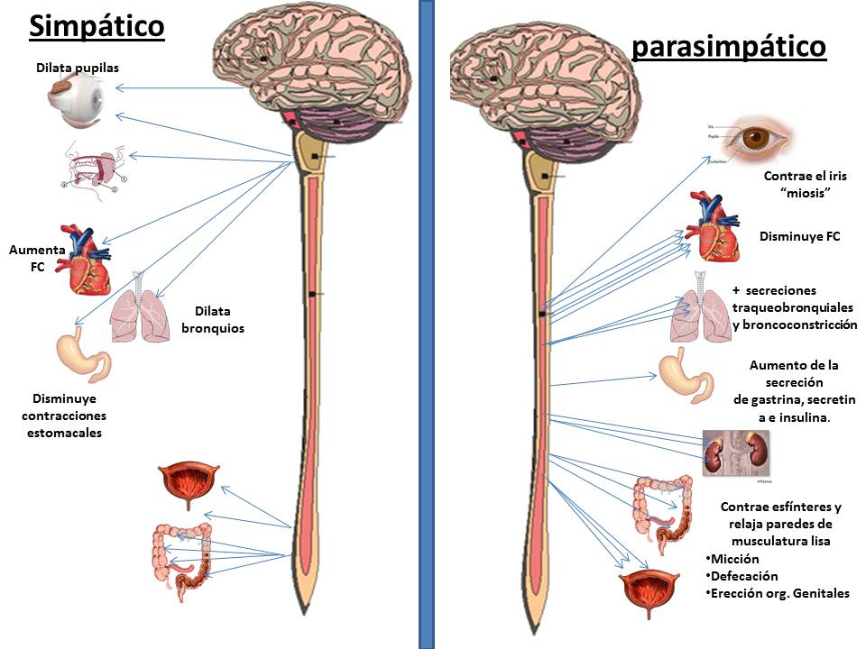 nervios espinales funcion yahoo dating
