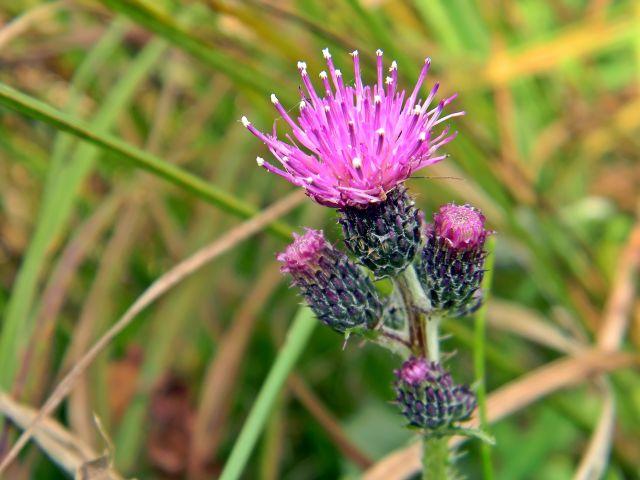 łąka i zioła, rośliny dziko rosnące