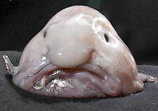 هذه ليست شخصية كرتونية انها مخلوق بحري