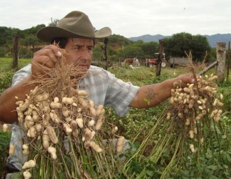 Cacahuates Estancia