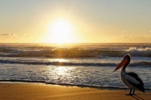 Perdido Key Vacation Rental Homes By Owner