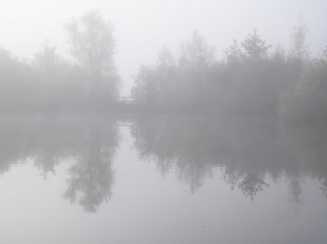 Thick mist over water reducing trees to silhouettes