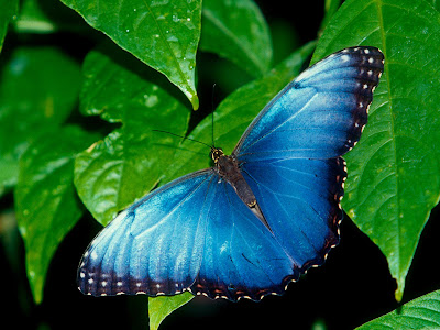Beautiful Butterfly Normal Resolution Wallpaper 11
