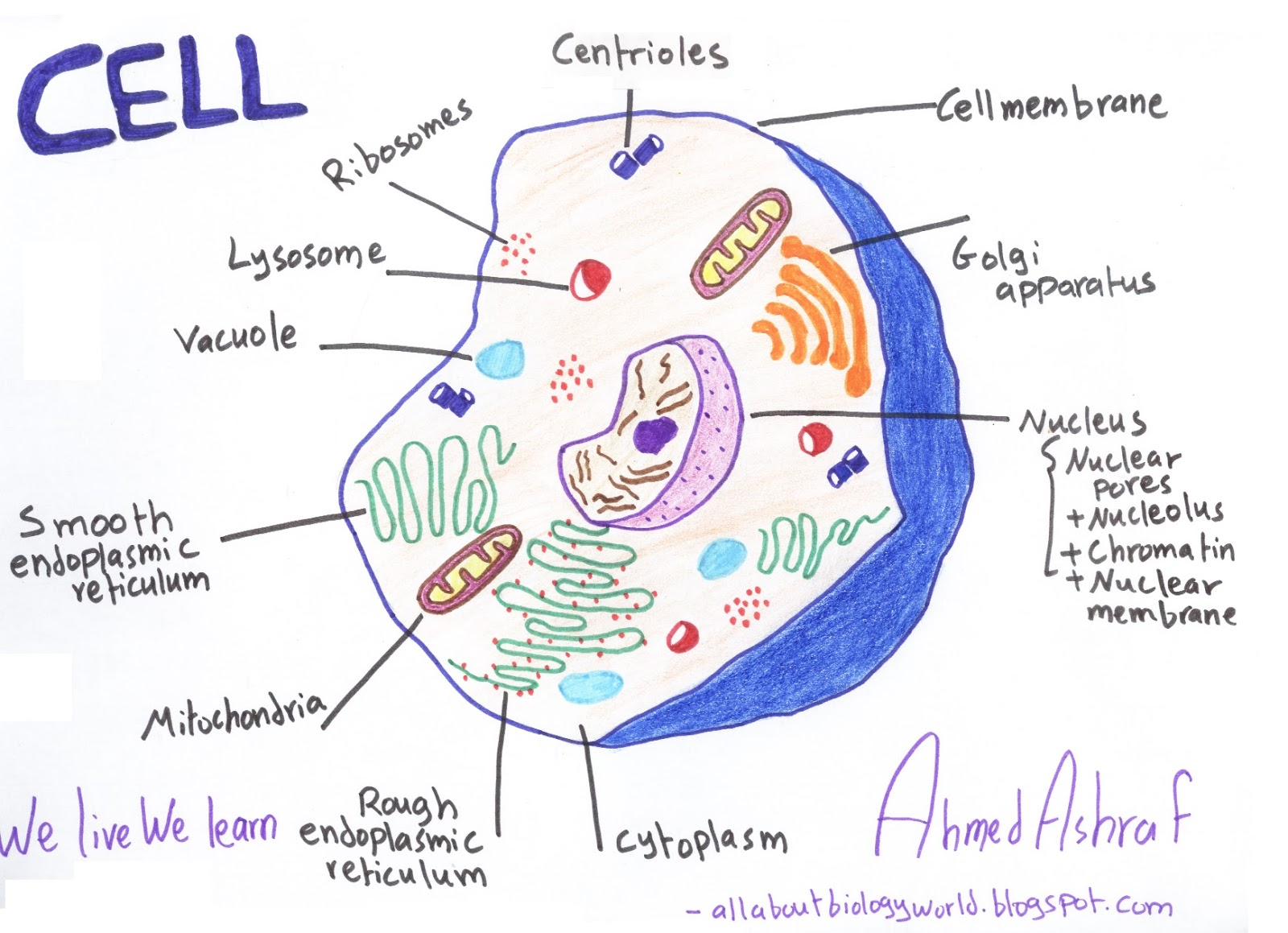 Biology Club: Our cells #1 - ( structure, function ...