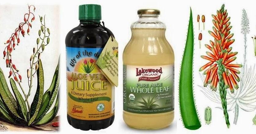 Ottawa Valley Dog Whisperer Aloe Vera Juice Herbs For