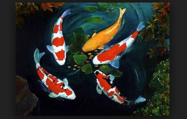Jenis Ikan Hias koi Terpopuler Saat ini