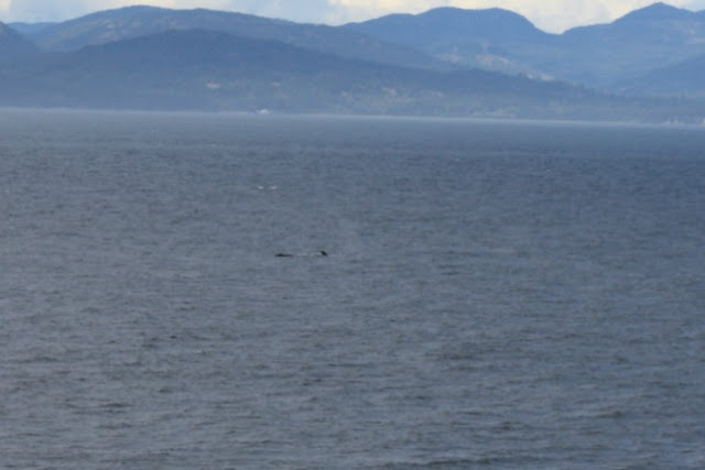 Whale spotted from cruise ship