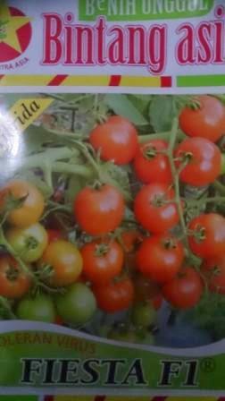 Tomat Fiesta, Benih, Fiesta, BCA,tomat, tahan virus, toleran virus,kuning, keriting, unggul, dataran rendah,  petani, Harga murah, Budidaya, Tanaman, Tomat Fiesta kebal Virus