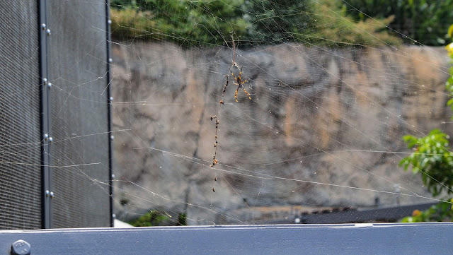 Spider and web at Sydney's Taronga Zoo