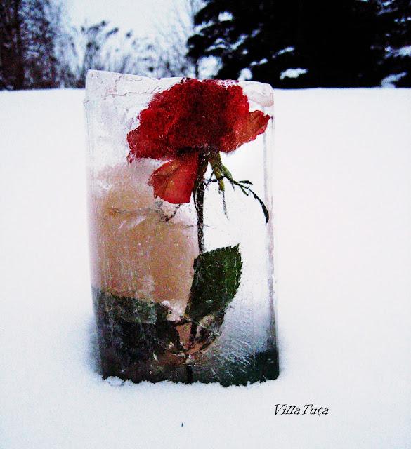 jäädytettyjä-kukkia.jpg