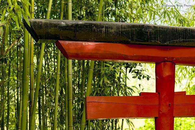 Detalle del Tori en la Bambouseraie en Cévennes, Francia por El Guisante Verde Project