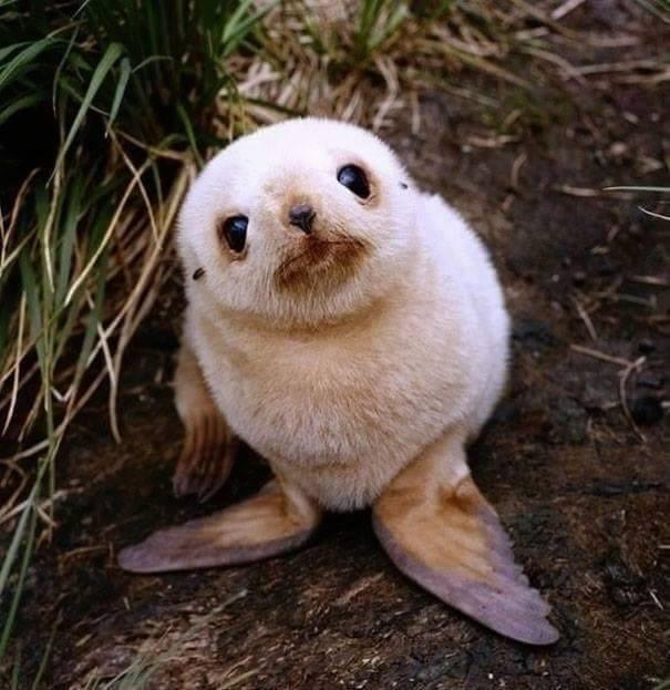 lindos%2Banimais%2Bbebe%2B%2B%252811%2529 - Os filhotes de animais mais lindinhos que você já viu!