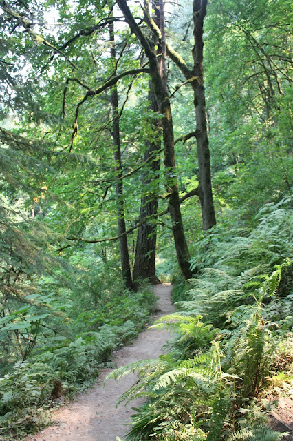 Shaded hiking path with luscious vegetation at Latourell Falls in Oregon.