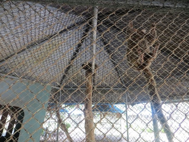 обезьяны в клетке