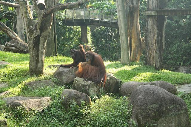 monos_zoo_singapur