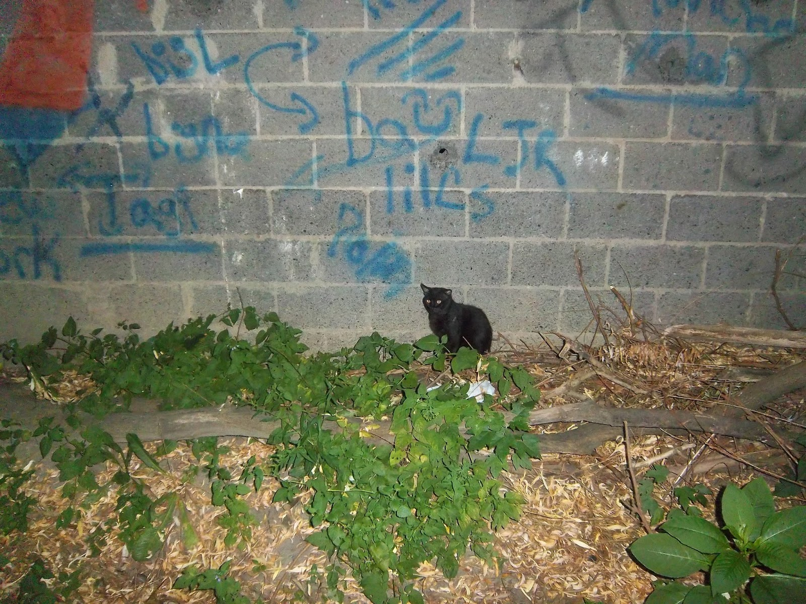 Black Cat His Coming Was Foretold