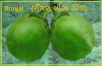green brinjal seeds ahmedabad