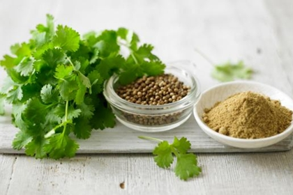 ผักชี (Coriander) @ www.bbc.co.uk