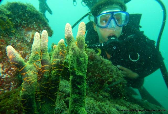 mergulho de cilindro - arraial do cabo