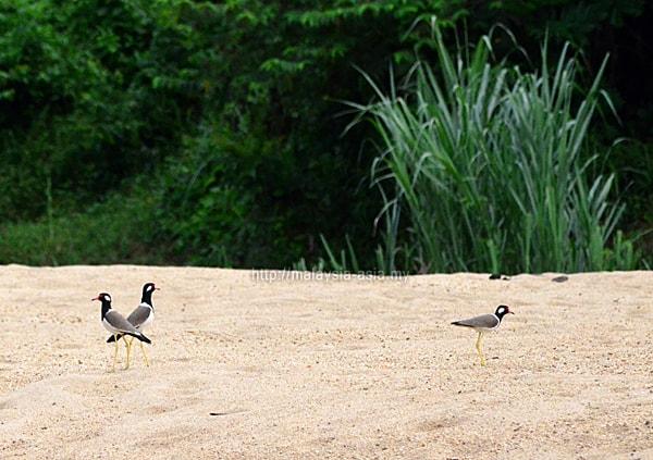 Taman Negara Birds