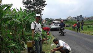 Wujudkan Tegalgondo Hijau, Karang Taruna Putra Pendawa Bangsa Tanam 3000 Bibit Pohon