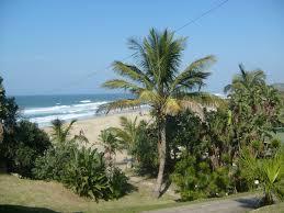 iklim untuk kelapa