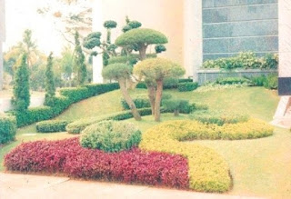 Galeri Taman - Tukang Taman Surabaya 20