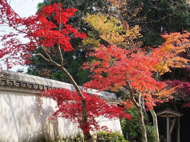 美しい紅葉が土塀に影を落として・・・。 gottuan's room: 洛西 花の寺