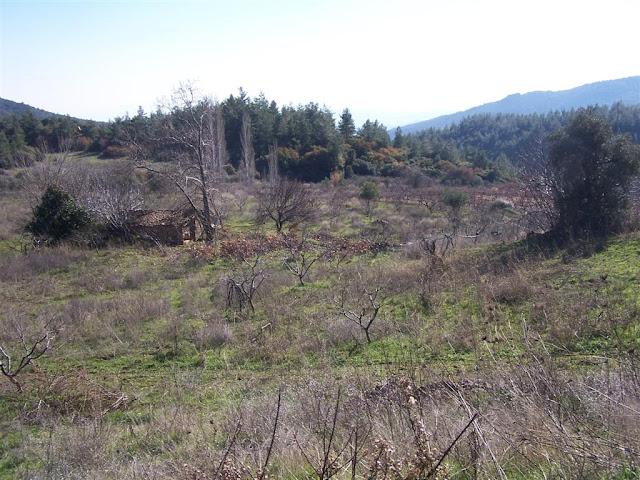 Şirince yolunda çınarlı vadiye yakın yıkıntı alanları