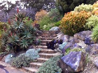 Blue Mountains Botanic Gardens, Mt Tomah