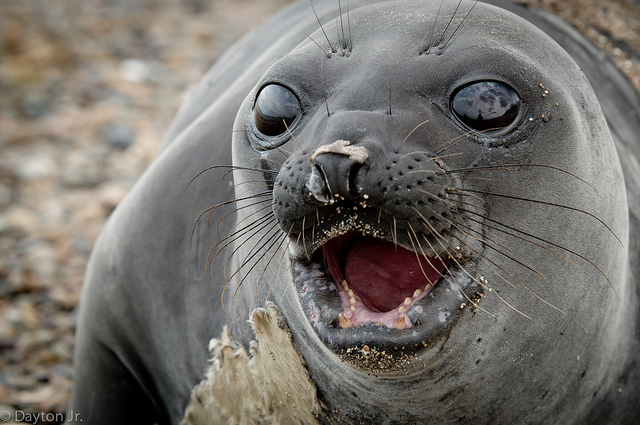 Very Cute Baby Wallpapers Photos All About Funny Pictures Collection Bbay Elephant Seals