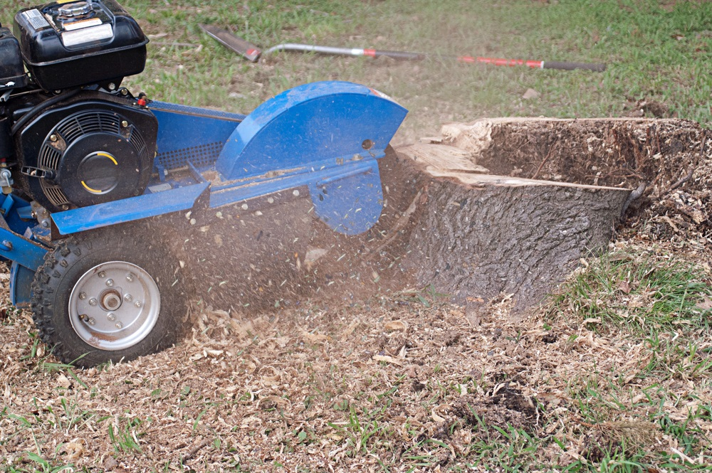 How to Get Rid of Annoying Tree Stumps in the Garden