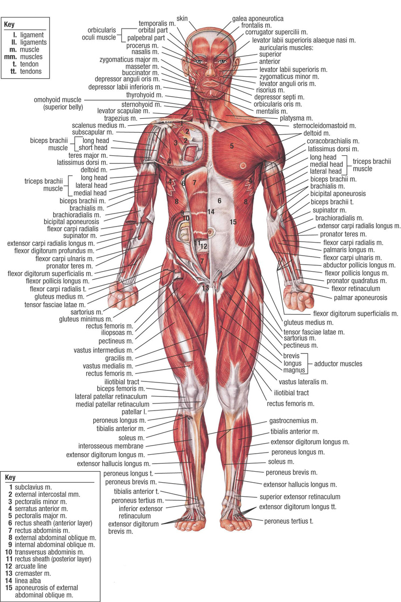 medium resolution of achoshare list of free interactive web to explore 3d and 2d human print body diagram 3d body diagram