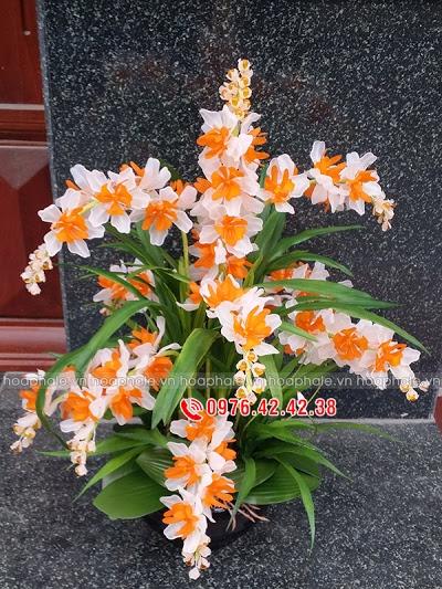 Cua hang hoa pha le tai Dong Anh