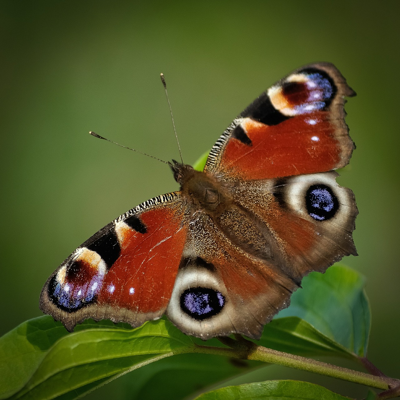 Butterflies In November And British Butterflies That