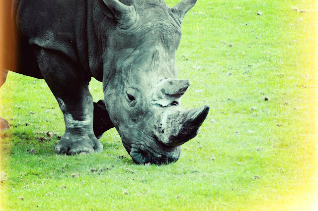 day out, west midlands safari park, wildlife, competition, photographer, photography, beauty blogger, wild animals, rhino,