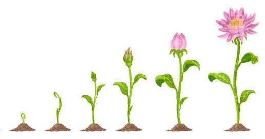 Ciri Ciri Pertumbuhan dan Perkembangan pada Tumbuhan ...