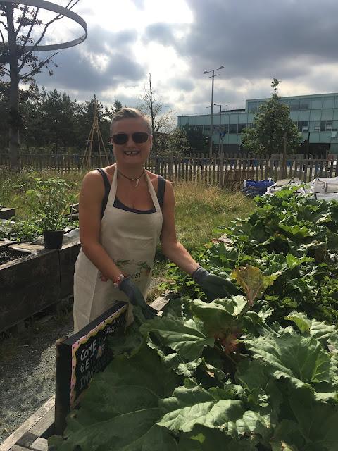 madmumof7 harvests rhubarb at Mobile Garden City