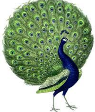 peacock essay in tamil Dance forms of tamil nadu this article has multiple issues please help improve it or discuss these covered with saffron cloth and further decorated on the sides with peacock feathers this is mainly a religious dance, performed in worship of lord murugan.