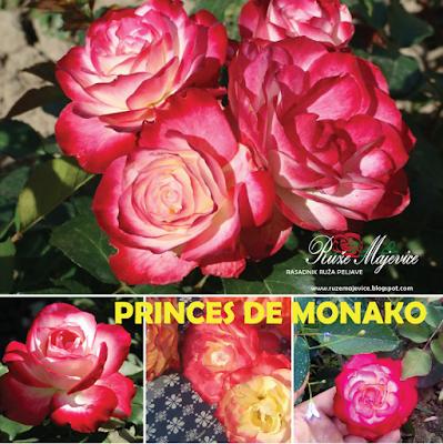 Ruže Bosna i Hercegovina