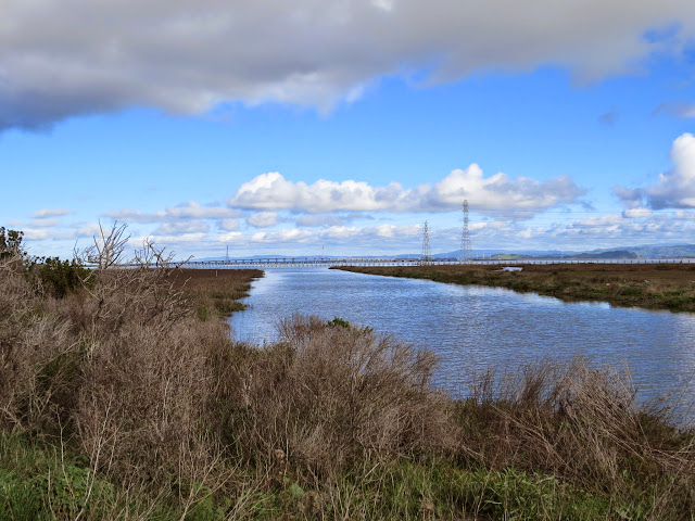 water channel for bird watching in the Bay Area in the Palo Alto Baylands