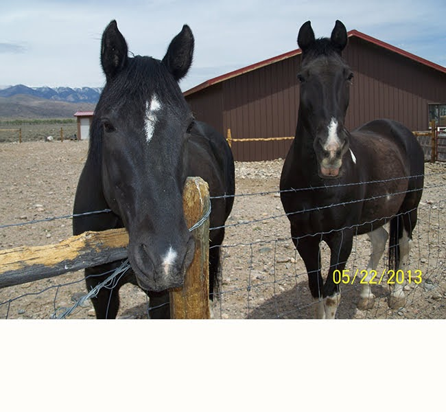 My horses Buddy & Doc
