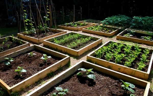 Κάλεσμα για δημιουργία Δημοτικών λαχανόκηπων στο Ναύπλιο