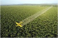 Glifosato, Monsanto, Transgenicos, OMG, Herbicidas, Pesticidas, Toxinas,