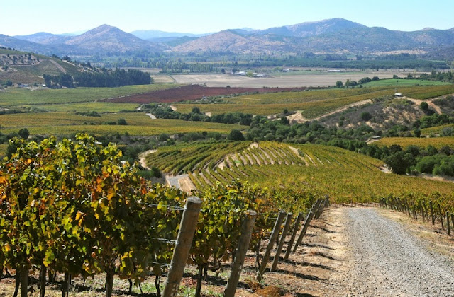 O que ver na excursão para a vinícola Concha y Toro