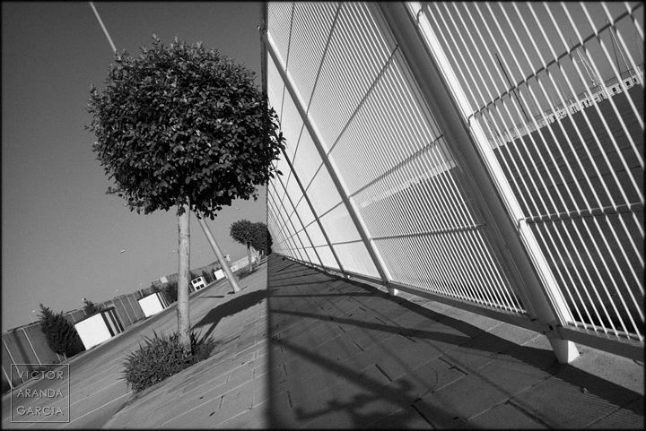 fotografía, Valencia, Descartesiano, Límites, árbol, Club Naútico